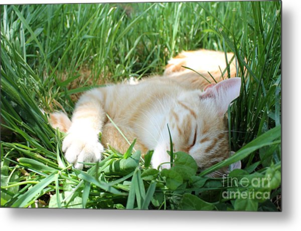 Summer Napping Metal Print