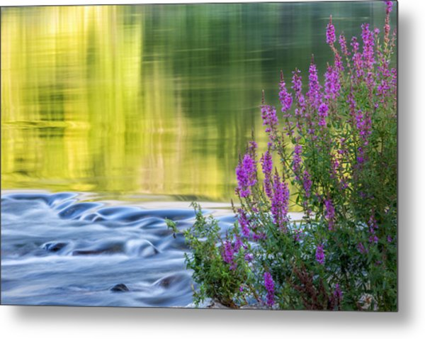 Summer Reflections Metal Print
