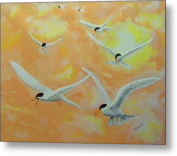 Summer Terns Metal Print by Rich Mason