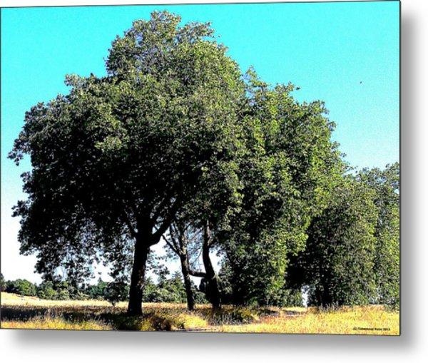 Summer Trees Metal Print