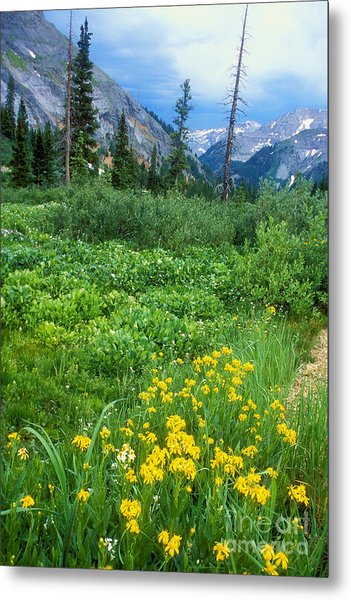 Summer Vista Near Durango Metal Print