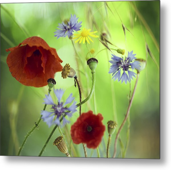 Summer Wildflower Color Metal Print