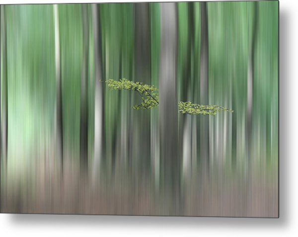 Summermorning Metal Print by Huib Limberg