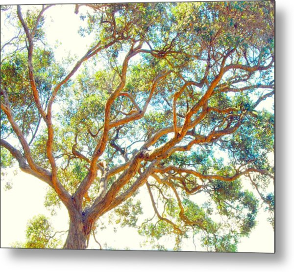 Metal Print featuring the photograph Summertime Tree by Jocelyn Friis