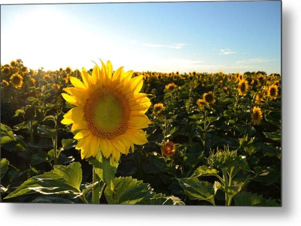 Sun And Sunflower 2  Metal Print