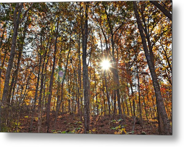 Sun Beams Dance In Autumn Trees Metal Print