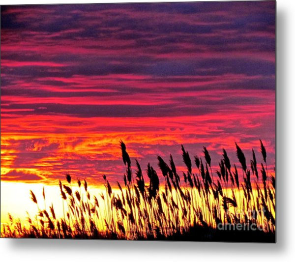 Sun Drifts To Sleep Metal Print by Q's House of Art ArtandFinePhotography