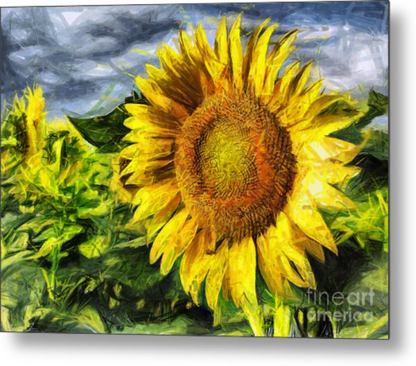Sunflower Drawing  Metal Print