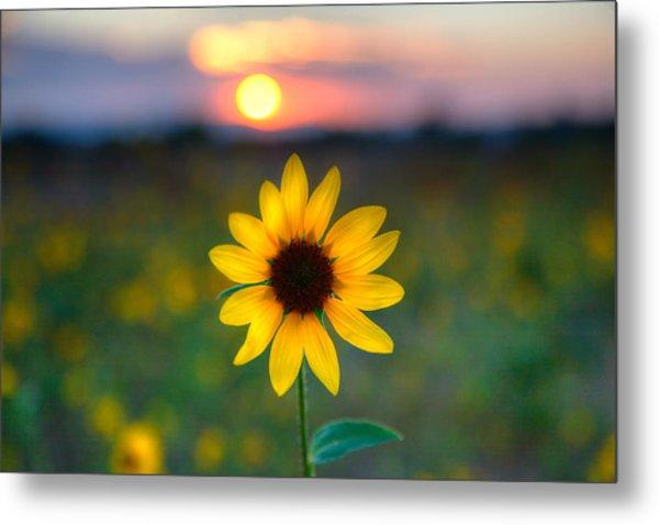 Sun Flower Iv Metal Print