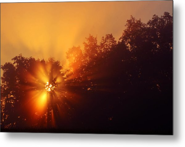 Sun Fog Trees-1 Metal Print