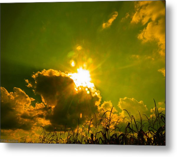 Sun Nest Metal Print