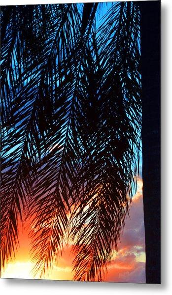 Sun Palm Metal Print