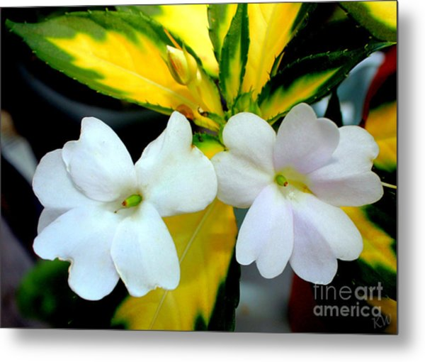 Sun Patiens Spreading White Variagated Metal Print