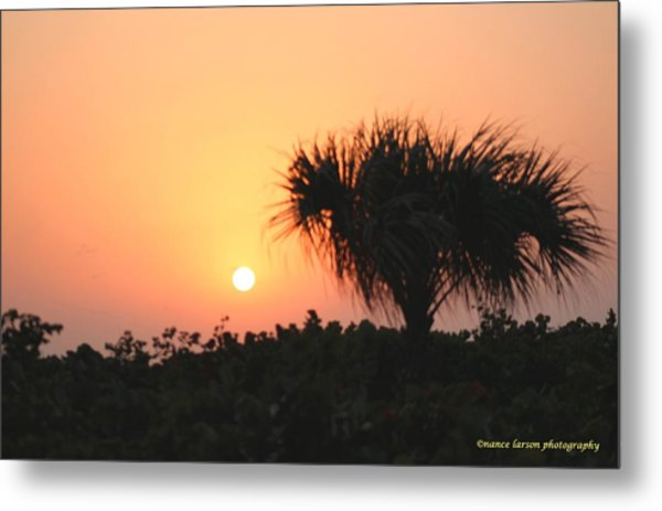 Sun Rise And Palm Tree Metal Print