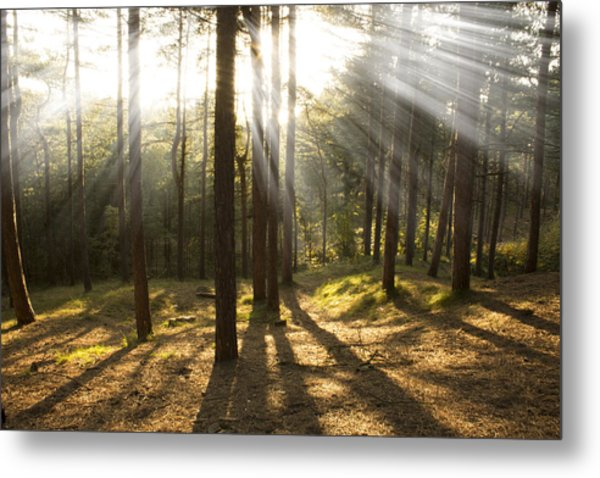 Sunbeams Through The Trees Metal Print by Paul Madden