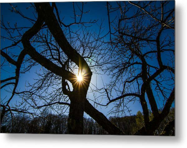 Sunburst In The Orchard Metal Print
