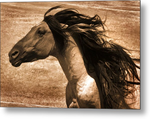 Sundowner Metal Print by Lourie Zipf