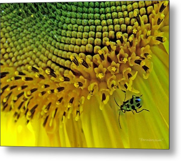 Sunflower And Beetle Metal Print