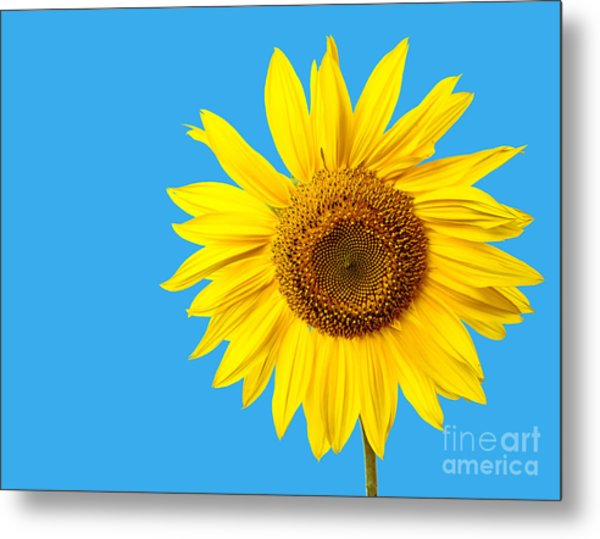 Sunflower Blue Sky Metal Print