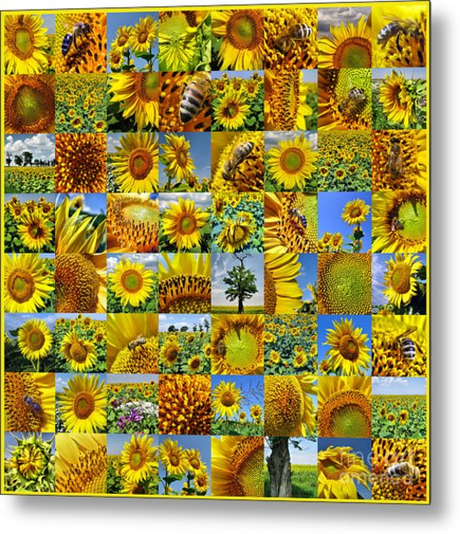 Sunflower Field Collage In Yellow Metal Print