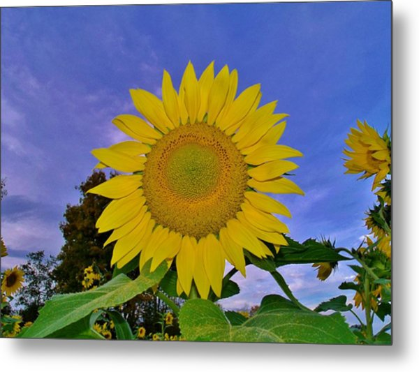 Sunflower In The Sky Metal Print