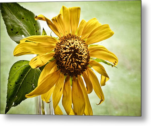 Sunflower In Window Metal Print