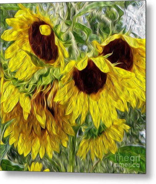 Sunflower Morn  Metal Print