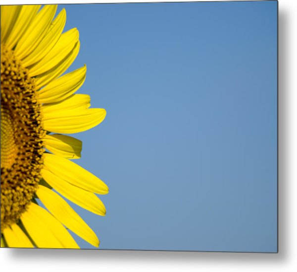 Sunflower Metal Print by Paige Sims