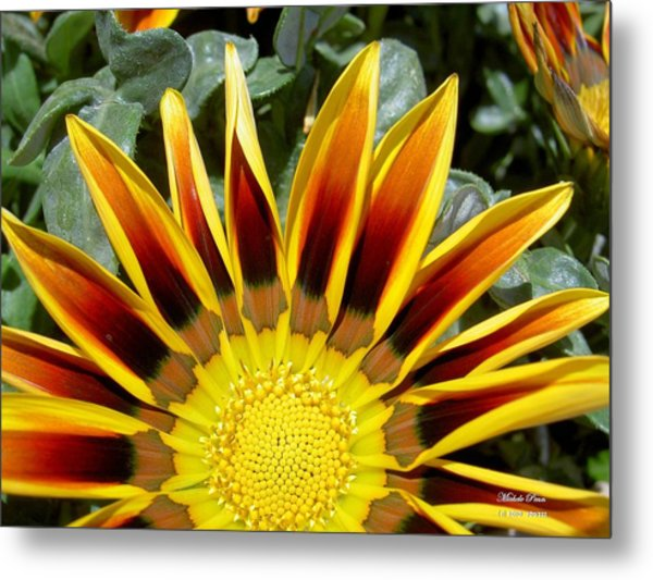 Sunflower Smiling Limited Edition Metal Print