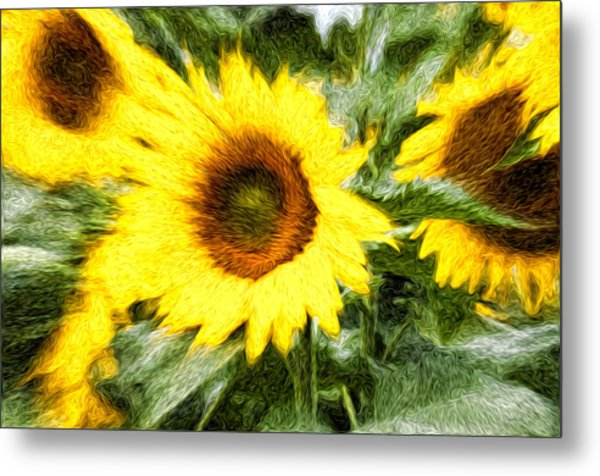 Sunflower Study 3 Metal Print by Mitchell Brown