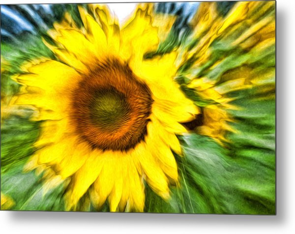 Sunflower Study 4 Metal Print by Mitchell Brown