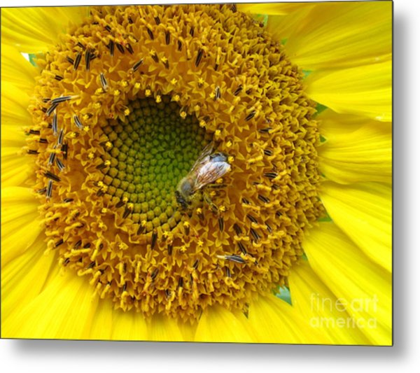 Sunflower Visitor Series 2 Metal Print