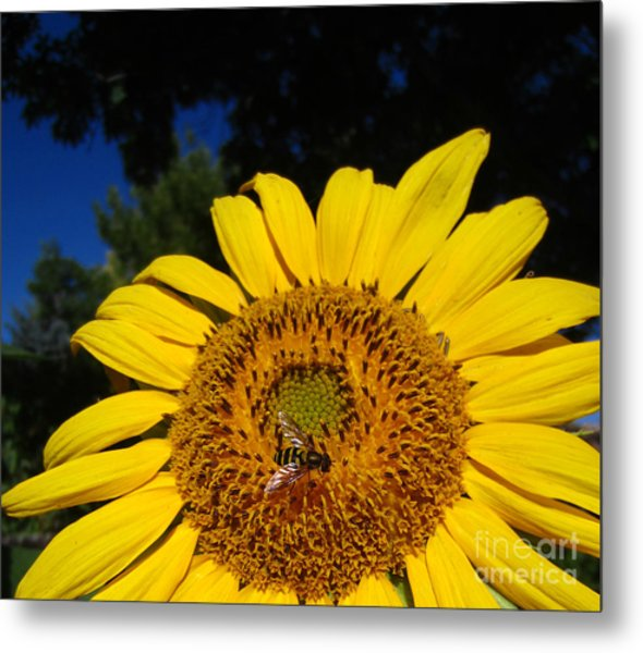 Sunflower Visitor Series 4 Metal Print