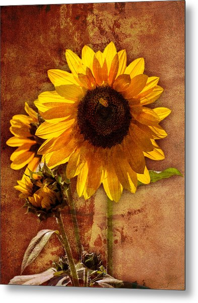 Metal Print featuring the photograph Sunflower With Bee Number Two  by Bob Coates