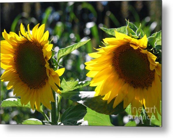 Sunflowers Metal Print by Manda Renee