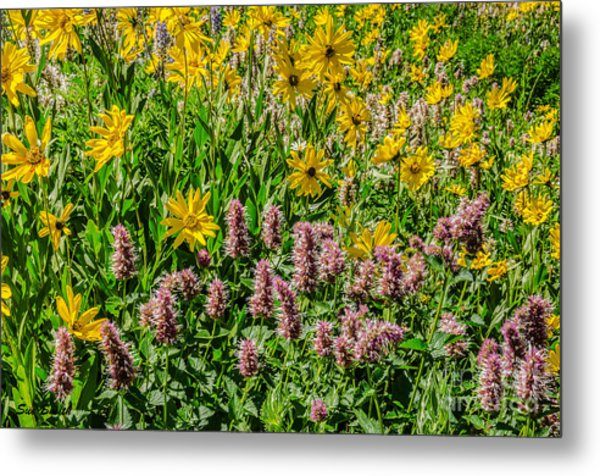 Sunflowers And Horsemint Metal Print