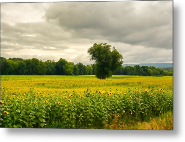 Sunflowers And The Tree Metal Print