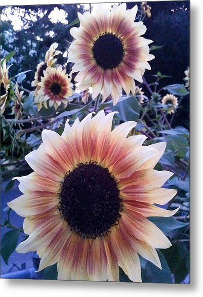 Sunflowers At Dusk Metal Print