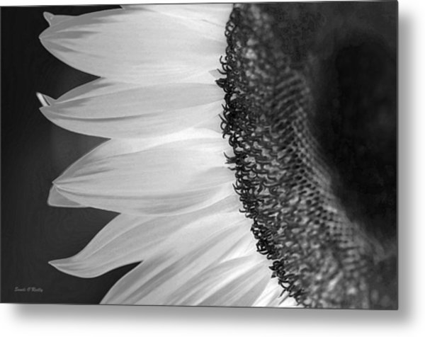 Sunflowers Beauty Black And White Metal Print