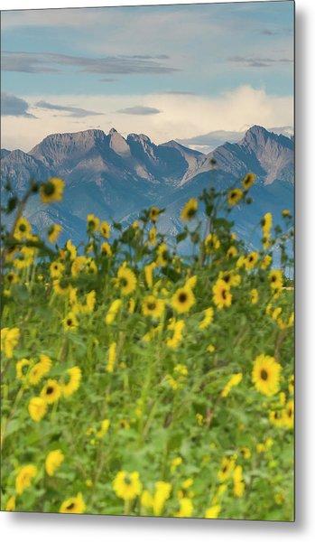 Sunflowers In The San Luis Valley Metal Print