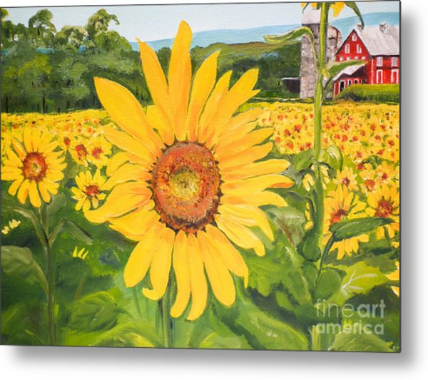 Sunflowers - Red Barn - Pennsylvania Metal Print