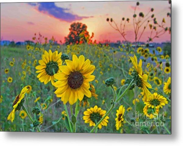 Sunflowers Sunset Metal Print