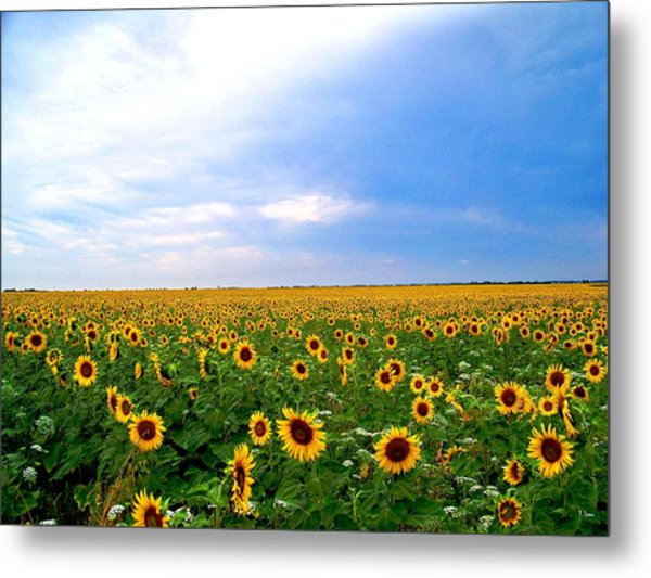 Sunflowers Metal Print by Thomas Leon