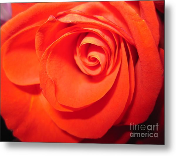 Sunkissed Orange Rose 9 Metal Print