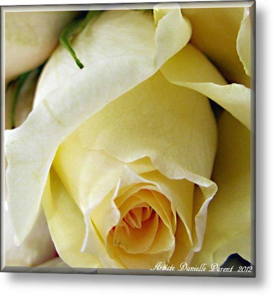Sunkissed Yellow Rose Metal Print