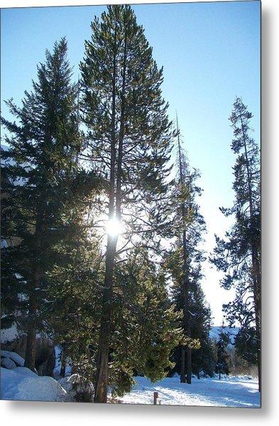 Sunlight Through A Tree Metal Print