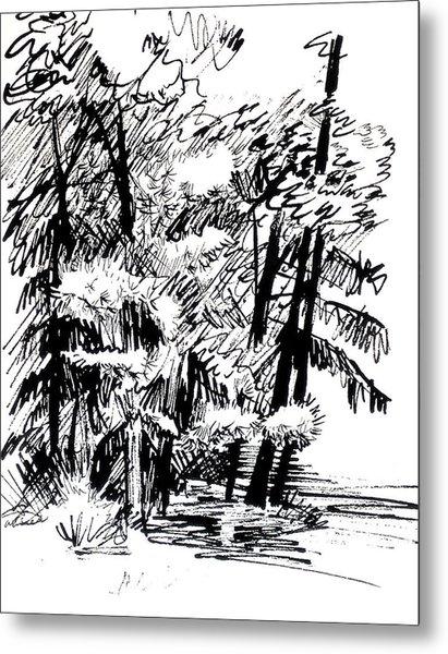 Sunlit Pines And Hemlocks Metal Print
