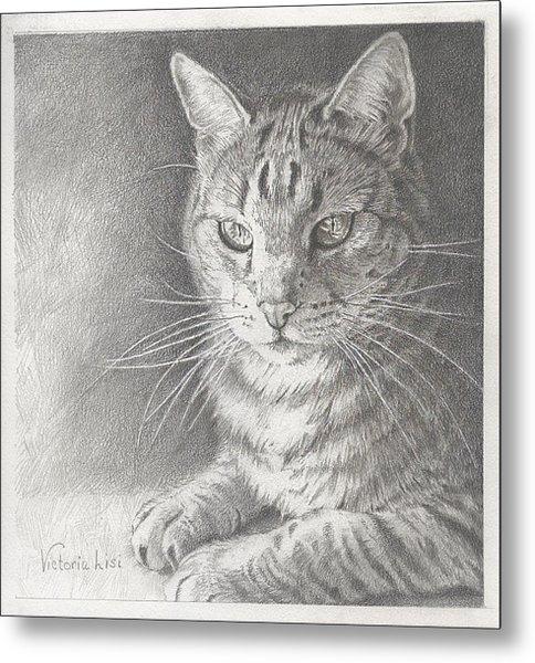 Sunlit Tabby Cat Metal Print
