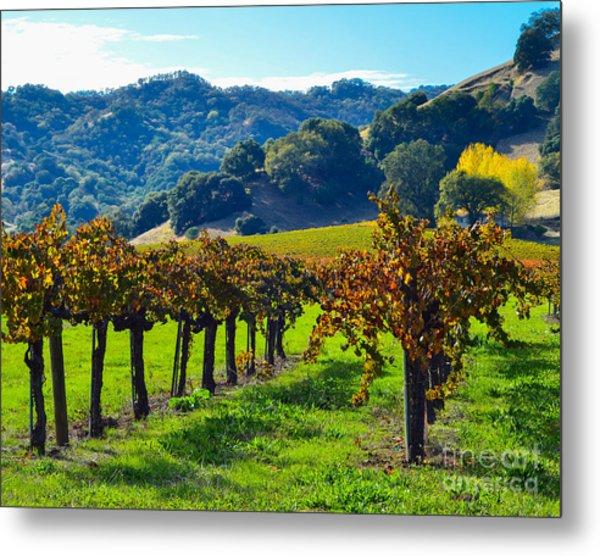 Sunny Autumn Vineyards Metal Print