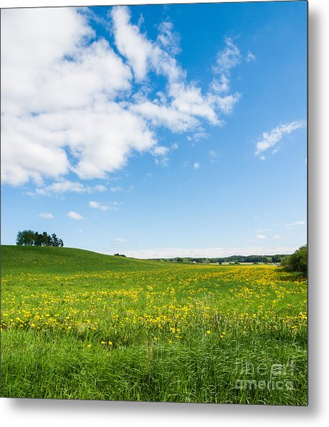 Sunny Day At The Fields Of Gold Metal Print